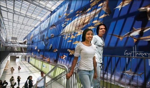 Nova Southeastern University - University Center Mural by Guy Harvey